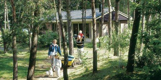 Ferienhaus Heihaas - 6-Pers.-Ferienhaus - Luxus (354956), Putten, Veluwe, Gelderland, Niederlande, Bild 20