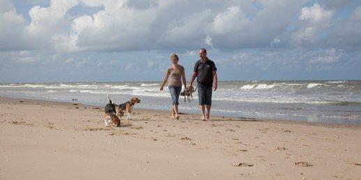 Ferienhaus Beach Resort Ooghduyne - 6- Pers.-Landhaus - Luxus (1239640), Duinzoom, , Nordholland, Niederlande, Bild 10